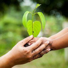 Devenons des maîtres jardiniers plutôt que des sculpteurs